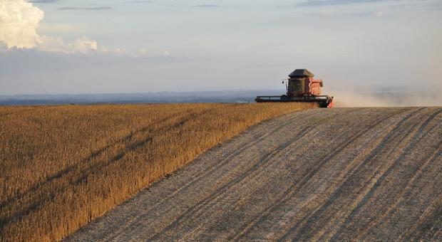 Ukraina: Początek zbiorów soi