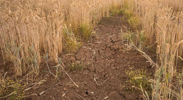 Ardanowski: 11 mld zł pomocy dla rolników do końca listopada