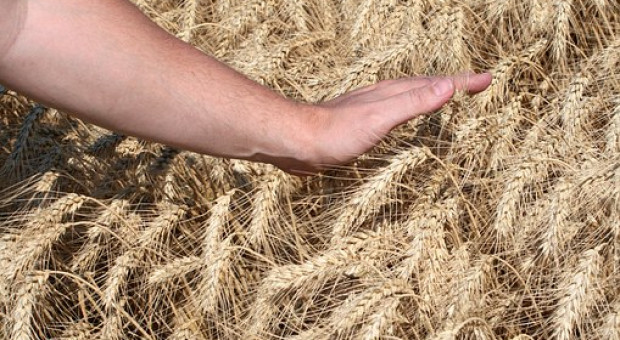 Wniosek o dopłaty do nasion przez Internet?