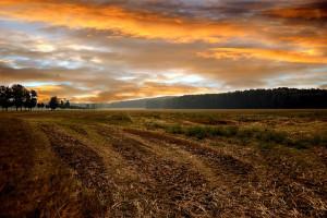 Rosja oferuje dzierżawę miliona hektarów ziemi na Syberii