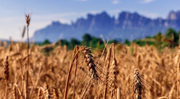 """MRiRW: Trwają prace nad wzorem umowy """"na dostarczenie produktów rolnych"""""""