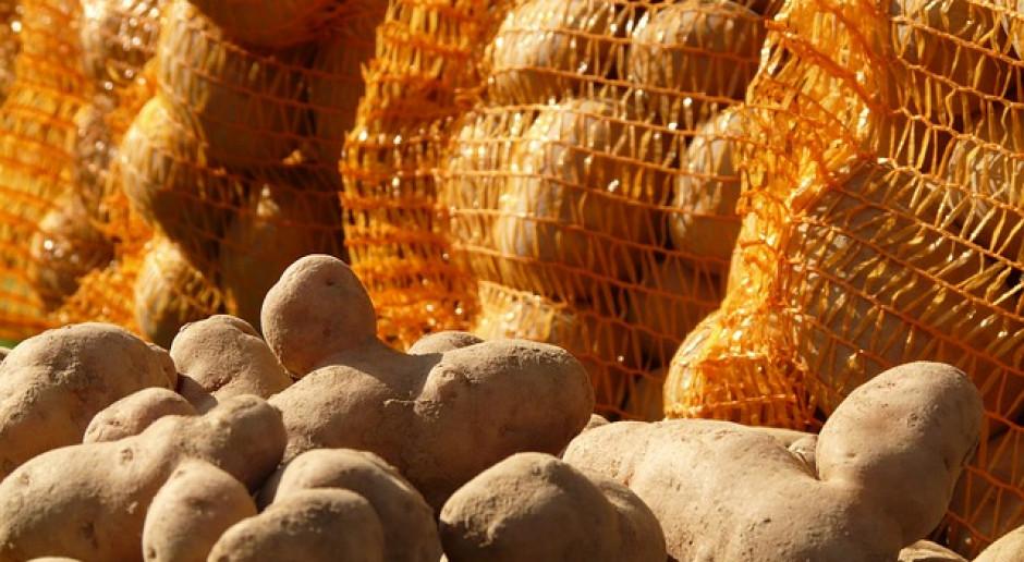 Rosja: Do 3 września zebrano 81 mln ton zboża