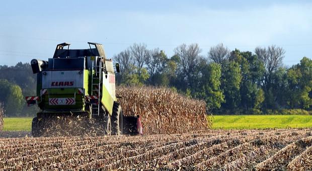 Ukraina: Początek zbioru kukurydzy