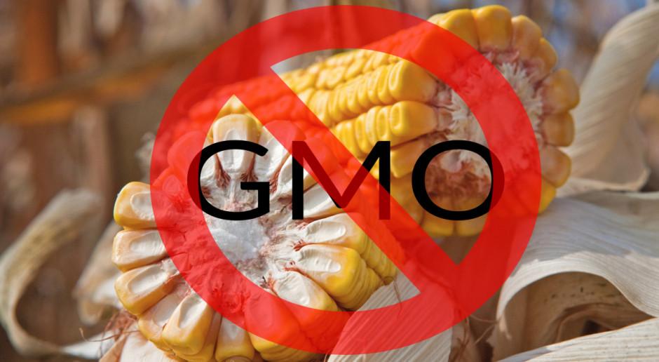 Resort rolnictwa aktualizuje wykaz odmian zakazanej kukurydzy GMO