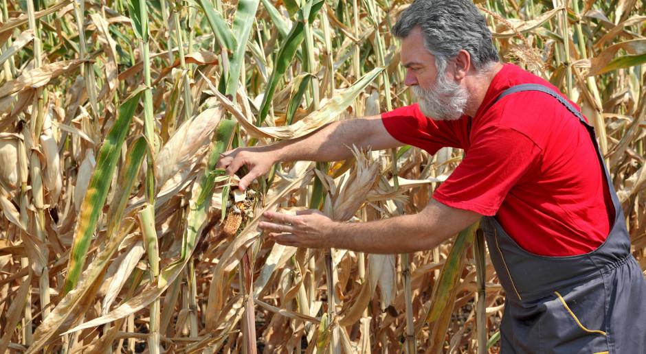 MRiRW: Straty spowodowane suszą przekraczają już 3,6 mld zł