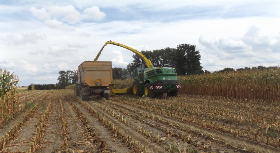 Ile kosztuje zbiór kukurydzy na kiszonkę? Ceny usług w sezonie 2018