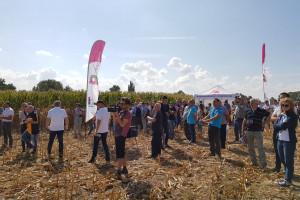 Kukurydza na rekordową kiszonkę zebrana