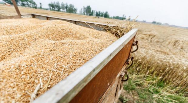 Rosja: Nie będzie ceł eksportowych na zboże