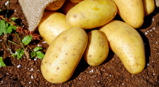 Ceny ziemniaków będą rosły