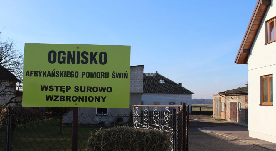 Ardanowski: Zapanowaliśmy nad afrykańskim pomorem świń w Polsce