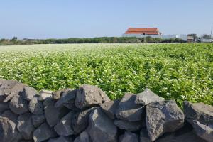 Ukraina: Zebrano prawie 35 mln ton zbóż i bobowatych