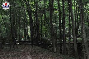 W powiecie zamojskim podczas wycinki drzew poszkodowany został 47-latek z gminy Skierbieszów