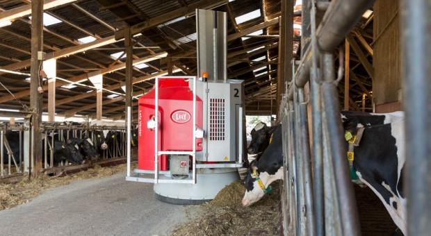 Kolejny krok w automatycznym żywieniu krów