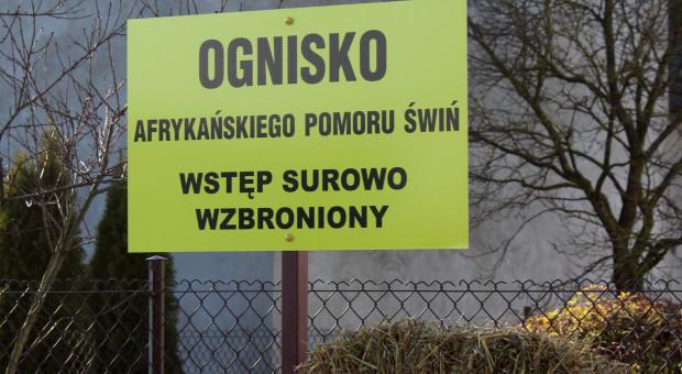 Ognisko ASF blisko granic województwa łódzkiego