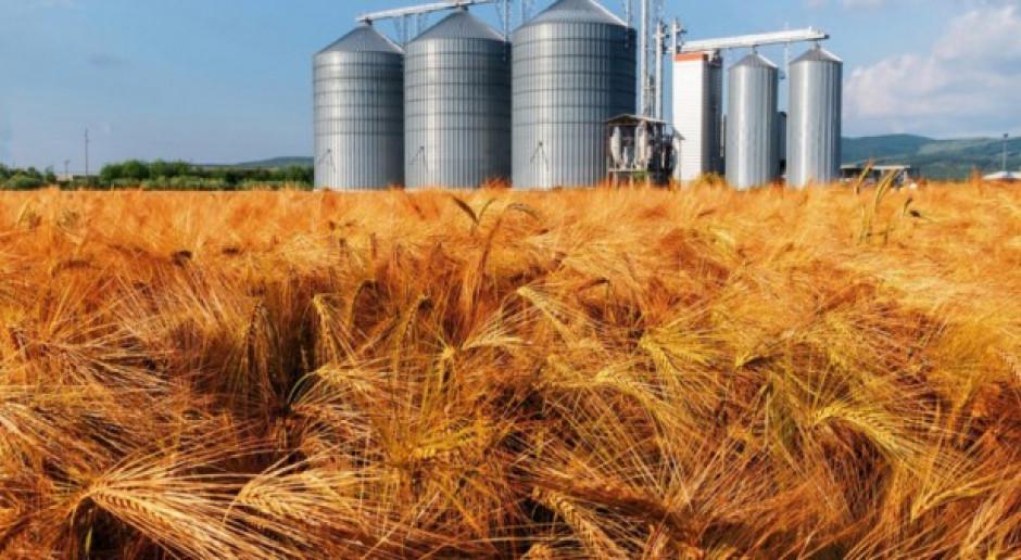 USDA: Wzrost światowej prognozy produkcji pszenicy i zbóż paszowych