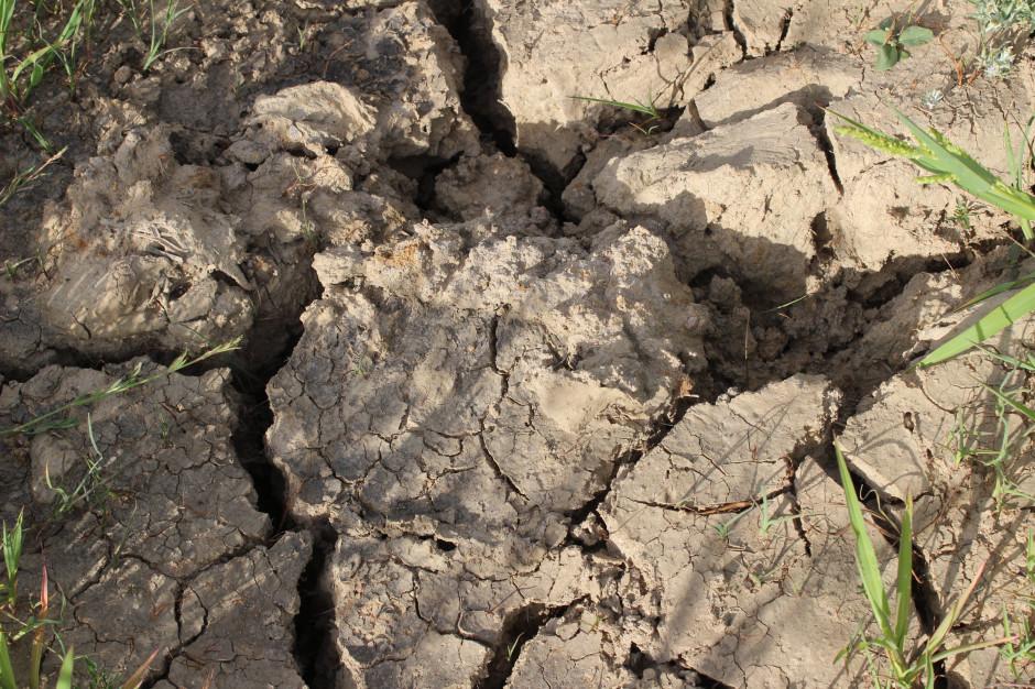 Koniec maja i początek czerwca były okresem utrzymującej się suszy)