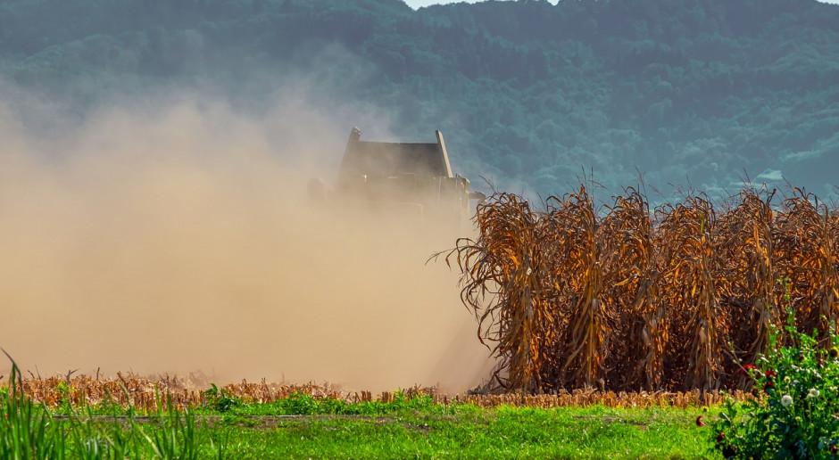 Ukraina: Zebrano pierwsze 1,5 mln ton ziarna kukurydzy