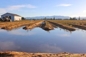 Rozpoczął się jesienny sezon sprzedaży ubezpieczeń rolnych w Pocztowym TUW