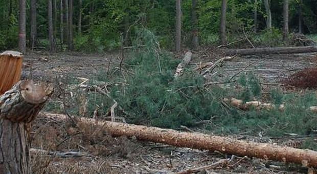 Kolejna tragedia przy wycince drzew