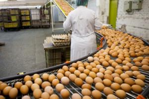 Niemcy: Przekroczony poziom dioksyn w jajach