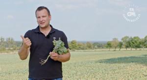 Rzepak to główny bohater kolejnego odcinka Agrorewolucji