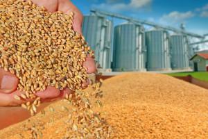 KOWR: Do końca roku ceny zbóż wzrosną