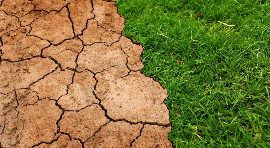 Na jakiej podstawie żąda się ubezpieczenia połowy areału przy udzielaniu pomocy suszowej?