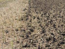 Po aplikacji REWITAL PRO + jak najszybciej przemieszać glebę