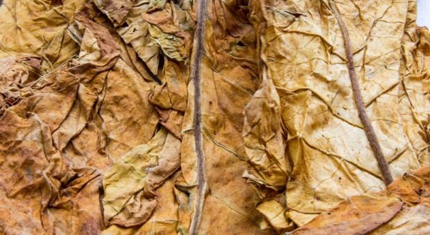 Straż Graniczna przejęła tytoń za ponad milion zł