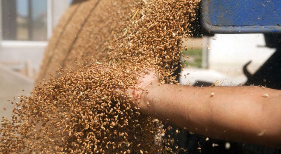 GUS oszacował tegoroczne zbiory zbóż
