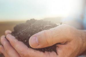 Poznać lepiej glebę