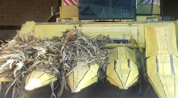 Nieszczęśliwy wypadek przy zbiorze kukurydzy