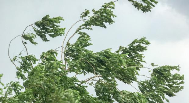 Bieszczady: na połoninach wieje silny wiatr, w porywach do 100 km/godz.