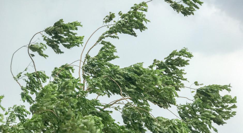 IMGW: Silny wiatr na południu kraju; nawet do 80 km/h