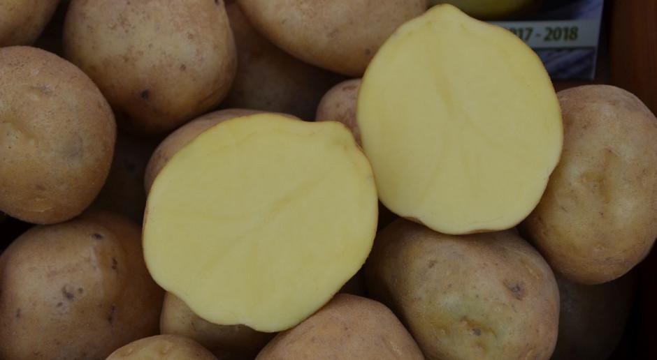 Wykopki ziemniaka – plon i jakość