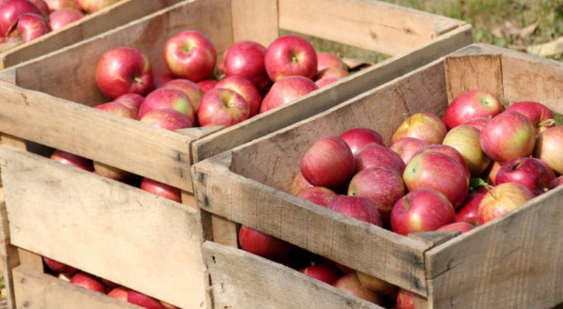 Pandemia mocno zachwiała cenami owoców. Najbardziej widać to po jabłkach