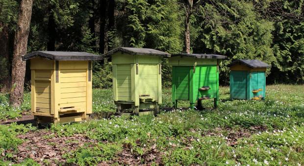 W pasiece pod Rzeszowem umarło 2,5 miliona pszczół