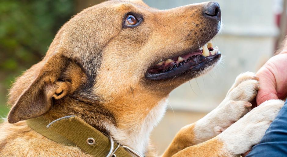 Polacy coraz bardziej empatyczni wobec zwierząt, ale nie wszystkich
