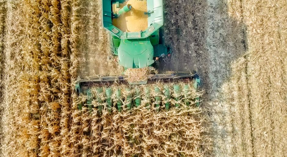 W ubiegłym tygodniu większość zbóż podrożała