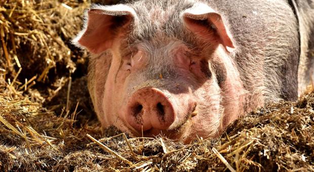 Nowe obszary ASF, na których można będzie skupić również mięso bez ustawy o zamówieniach publicznych