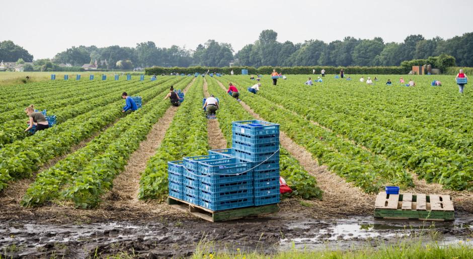 Portugalia: Rząd skieruje uchodźców do pracy w rolnictwie i turystyce