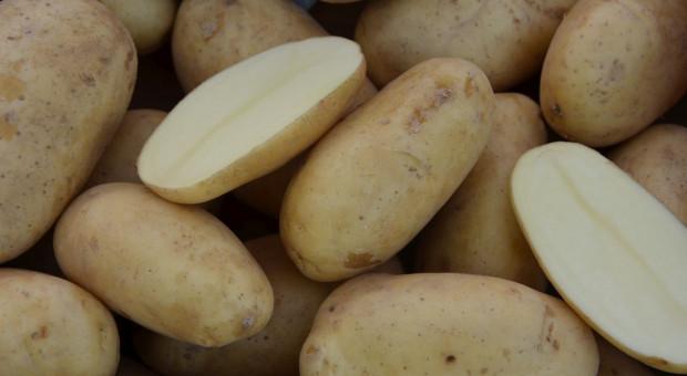 Ziemniak w dobrej cenie