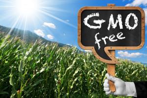 Bez-GMO - deklaracja grubymi nićmi szyta