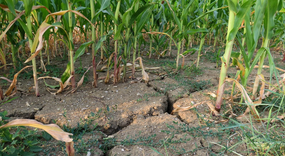 Pomoc po suszy dla najbogatszych?