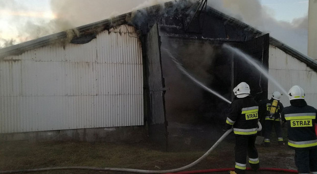 W chlewni na Podlasiu spłonęło ponad 2 tysiące świń