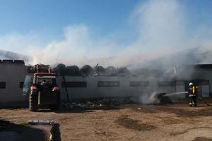 Pożar obory pod Iławą, padło 6 krów