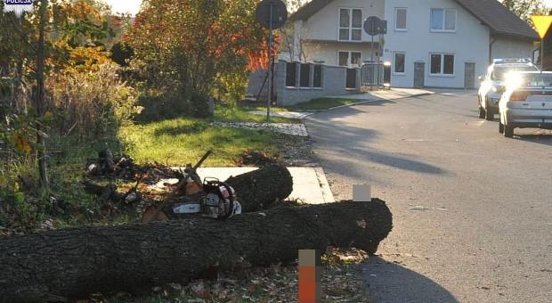 Ścięte drzewo przewróciło się na jadący drogą samochód