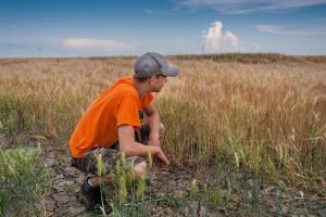 Będzie nowy system oceny klęski suszy w rolnictwie