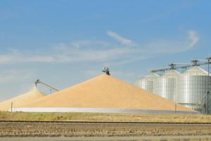Rosja: Do 18 października zebrano 110,9 mln ton zboża