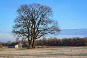 NSA uchylił decyzję unieważniającą nacjonalizację gruntów w Michałowicach
